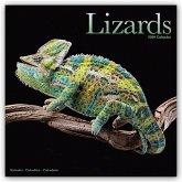 Lizards - Eidechsen 2020