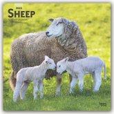 Sheep - Schafe 2020 - 18-Monatskalender