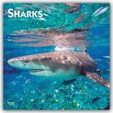 Sharks - Haie 2020 - 18-Monatskalender