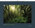 Magische Wälder 2020