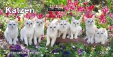 Panoramakalender Keith Kimberlin Katzen 2020