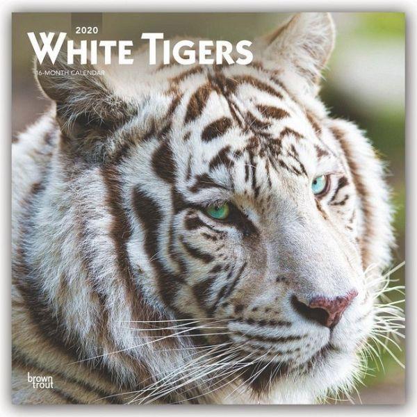 White Tigers Weiße Tiger 2020 18 Monatskalender