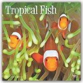 Tropical Fish - Tropische Fische 2020 - 18-Monatskalender