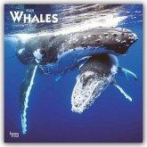 Whales - Wale 2020 - 18-Monatskalender
