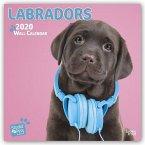 Labradors 2020 Square Wall Calendar