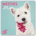 Westies - West Highland White Terrier 2020 - 18-Monatskalender