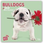 Bullish for Bulldogs - Bulldoggen 2020 - 18-Monatskalender