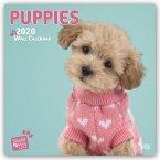 Puppy Love - Hundewelpen 2020 - 18-Monatskalender