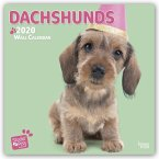 Dachshunds - Dackel 2020