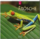 Frösche 2020