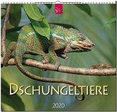 Dschungeltiere 2020
