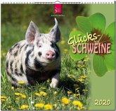Glücksschweine 2020