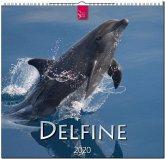 Delfine 2020