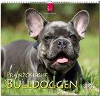 Französische Bulldoggen 2020