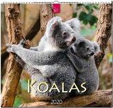 Koalas 2020