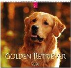 Golden Retriever 2020