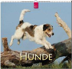Hunde 2020