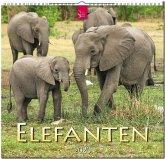 Elefanten 2020
