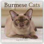 Burmese Cats - Burmesen - Burma Katzen 2020 - 18-Monatskalender