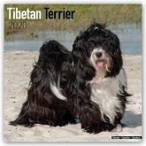 Tibetan Terriers - Tibet-Terrier - Tibet Terrier 2020 - 18-Monatskalender mit freier DogDays-App