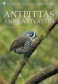 Antpittas and Gnateaters (eBook, ePUB)