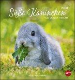 Süße Kaninchen 2020. Postkartenkalender