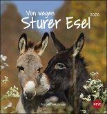 Von wegen sturer Esel 2020. Postkartenkalender