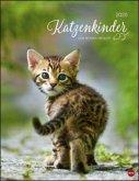 Katzenkinder Posterkalender 2020