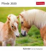 Pferde 2020. Kalender mit 53 Postkarten