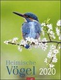 Heimische Vögel - Kalender 2020