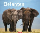 Elefanten - Kalender 2020