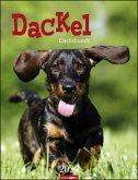 Dackel - Kalender 2020