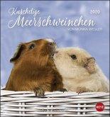 Meerschweinchen 2020. Postkartenkalender