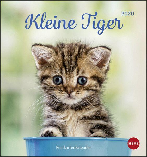 Katzen Kleine Tiger 2020 Postkartenkalender