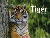 Tiger - Kalender 2020