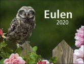 Eulen - Kalender 2020
