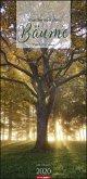 Die Kraft der Bäume 2020