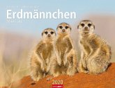 Erdmännchen - Kalender 2020