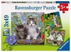 Ravensburger 08046 - Süße Samtpfötchen, Katzen, Katzenkinder, Kitten, Puzzle, Kinderpuzzle, 3x49 Teile