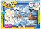 Ravensburger 28909 - Malen nach Zahlen, Tiere der Arktis, Eisbär, Robbe, Wal, Seelöwe, Rentier