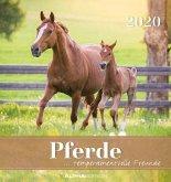 Pferde 2020 Postkartenkalender