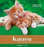 Katzen 2020 Postkartenkalender