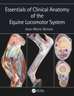 Essentials of Clinical Anatomy of the Equine Locomotor System (eBook, PDF) - Denoix, Jean-Marie