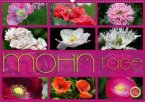 Mohn Tage (Wandkalender 2020 DIN A2 quer)