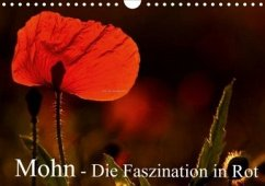 Mohn - Die Faszination in Rot (Wandkalender 2020 DIN A4 quer)
