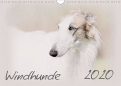 Windhunde 2020 (Wandkalender 2020 DIN A4 quer)