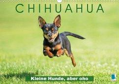 Chihuahua: Kleine Hunde, aber oho (Wandkalender 2020 DIN A3 quer)