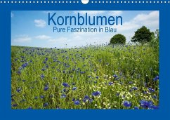 Kornblumen - Pure Faszination in Blau (Wandkalender 2020 DIN A3 quer)