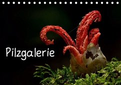 Pilzgalerie (Tischkalender 2020 DIN A5 quer) - Wurster, Beate
