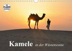 Kamele in der Wüstensonne (Wandkalender 2020 DIN A4 quer)